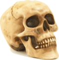 Free Stock Photo: Illustration of a human skull.