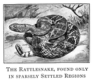 Free Stock Photo: Vintage illustration of a rattlesnake.