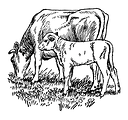 Free Stock Photo: Vintage illustration of a cow and calf grazing in a field.