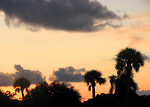 Free Stock Photo: A sunset with palm tree silhouettes.
