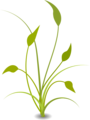 Free Stock Photo: Illustration of a green plant with a transparent background.
