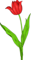 Free Stock Photo: Illustration of a red tuliip with a transparent background.