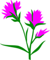 Free Stock Photo: Illustration of purple Indian Paintbrush flowers.