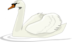 Free Stock Photo: Illustration of a swan swimming