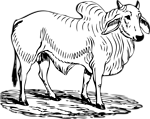 Free Stock Photo: Illustration of a brahma bull