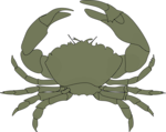 Free Stock Photo: Illustration of a crab.