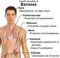 Free Stock Photo: Illustration showing the health benefits of bananas
