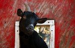 Free Stock Photo: A black goat sticking its head through a barn window.