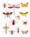 Free Stock Photo: Various colorful insect illustrations isolated on a white background