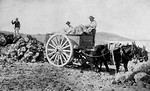 Free Stock Photo: Vintage photo of men loading a cart pulled by mules