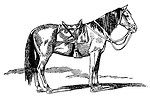 Free Stock Photo: Vintage illustration of a horse
