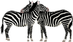 Free Stock Photo: Illustration of zebras.