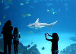 Free Stock Photo: A family watching a shark in an aquarium