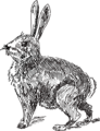 Free Stock Photo: Illustration of a rabbit