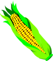 Free Stock Photo: Illustration of an ear of corn
