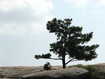 Free Stock Photo: Single tree on the top of Stone Mountain