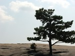 Free Stock Photo: Single tree on top of Stone Mountain