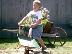 Free Stock Photo: A young boy pushing a wheelbarrow by flowers