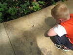 Free Stock Photo: A boy looking at an orange butterfly on the ground