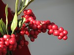 Free Stock Photo: Christmas red berries